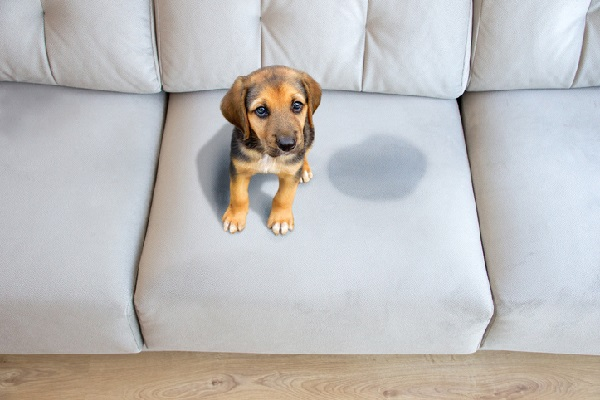 7 WAYS TO STAY SPOTLESS WITH PETS